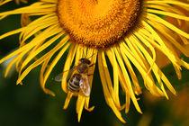 Die Biene von Bernhard Kaiser