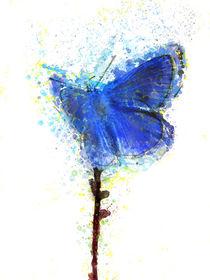blue butterfly   von Elena Oglezneva
