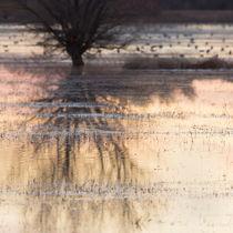 Bosque Reflections von Maresa Pryor-Luzier