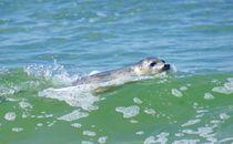Wellenreiten by kattobello