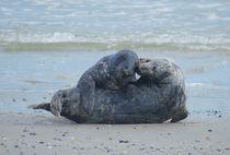 Robben Kuss von kattobello