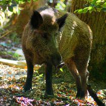 Wildschwein by kattobello