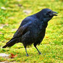 Raven Talk by kattobello