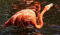 Flamingo Trunk von kattobello