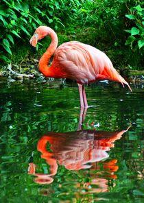 Flamingo im Grünen von kattobello