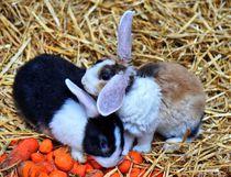 Kaninchen Kuscheln von kattobello