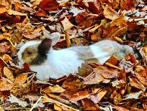 Kaninchen im Herbstlaub von kattobello