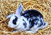 Schwarz weißes Kaninchen Baby im Stroh 3 von kattobello