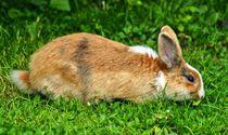 Kaninchen Dinner von kattobello