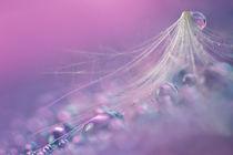Bubble von Bettina Dittmann