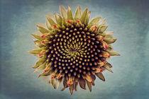 'Circle' by Bettina Dittmann
