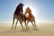 Two wild horses in the desert by past-presence-art