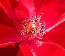 Florale Krone. von Zarahzeta ®