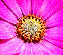 Florales Power-Zentrum. von Zarahzeta ®