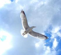 Freiheit. von Zarahzeta ®