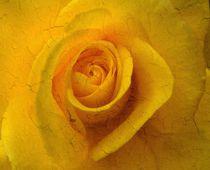 Rose orange by Renate Grobelny