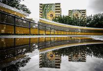 Sonnenblumen, Hellersdorf by Karsten Houben