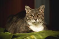 Das Gemüt der Katze von Daniel Nicklich