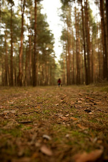 Waldboden von Daniel Nicklich