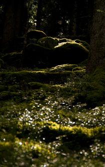 Waldeslicht by ysanne