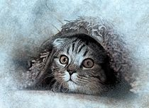 Kitten hiding under rug von past-presence-art