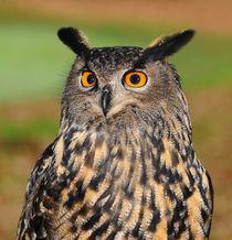 European eagle owl by past-presence-art