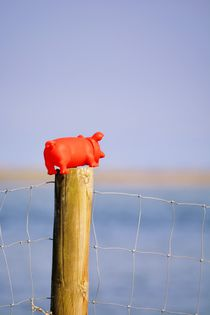 Das rote Schweinchen und die Sehnsucht by Renate Grobelny
