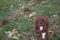 Eichhörnchen mit Haselnuss von Thomas Sonntag