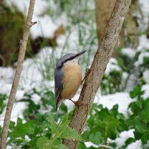 Kleiber im Winter by kattobello