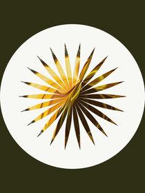 Mandala - Sonnenblume 1 by Chris Berger