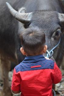 Kid with water buffalo in Tana Toraja, Sulawesi  von firefly