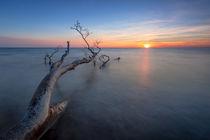 Badender Baum by photobiahamburg