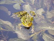 Frosch von maja-310