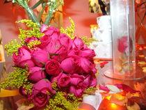 Brazilian Flowers 011 by ALOIZIO NASCIMENTO