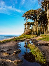 Küstenwald an der Ostsee bei Nienhagen by Rico Ködder