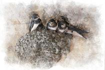 Nest of Swallows by Elena Oglezneva