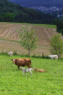 Kühe über dem Tal by Bernhard Kaiser