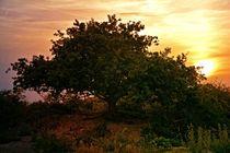 Der Baum von Claudia Evans