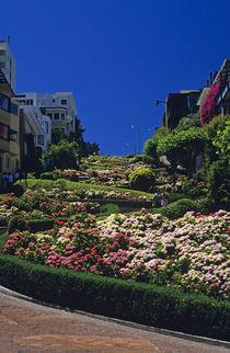 Flowers along Lombard Street by Jim Corwin