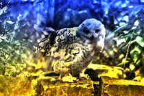 Traum Schneeeule von kattobello