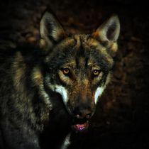 Wolf in der Dunkelheit by kattobello