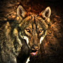 Wolf im Zwielicht von kattobello