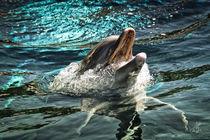 Delphin Zyklus I von Ingo Mai