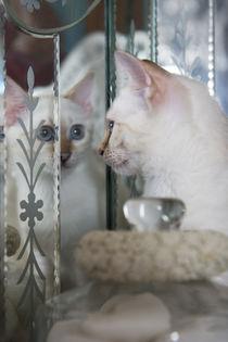 Bengal Kitten / 12 by Heidi Bollich