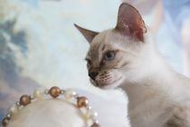 Bengal Kitten / 10 by Heidi Bollich