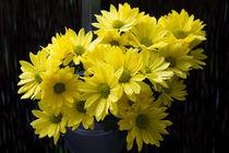 schöne Chrysanthemen by Karsten Bergmann