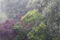 Regentag von Karsten Bergmann