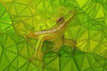 hidden frog von ancello
