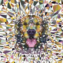 rainbow dog von ancello