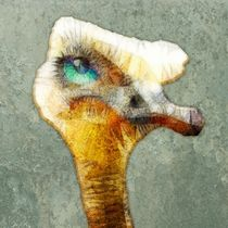 ostrich by ancello